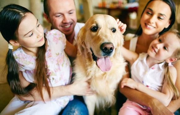 8 consejos para cuidar a tu perro este verano